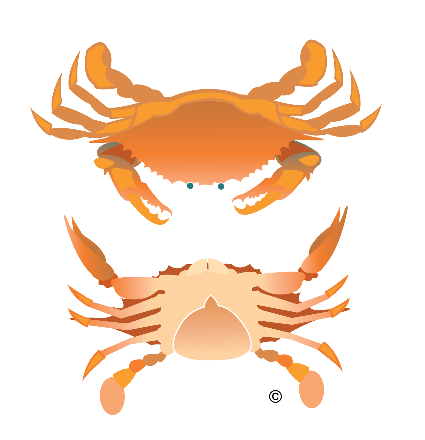 Vector Crab Illustration Clip Art